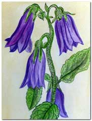 Liliac flowers