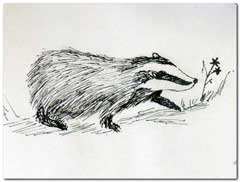 Pen and ink badger
