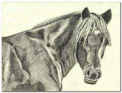 Pony in pencil