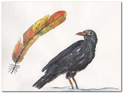 Blackbird and feather